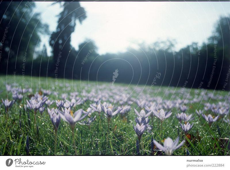Antischneearmee Natur grün schön Pflanze Blume Gras Blüte Landschaft Park Stimmung Umwelt Kraft ästhetisch Freizeit & Hobby violett natürlich