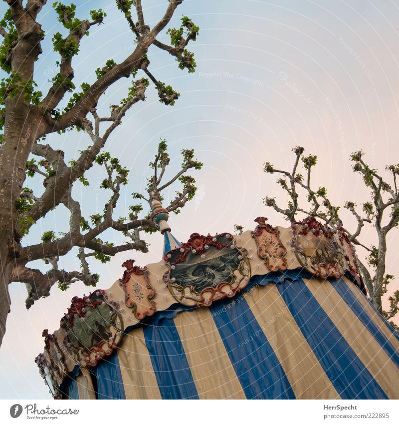 Unter Platanen alt Baum blau braun Feste & Feiern geschlossen Ast Jahrmarkt Nostalgie Abdeckung Karussell Zweige u. Äste Kultur Wolkenloser Himmel verziert