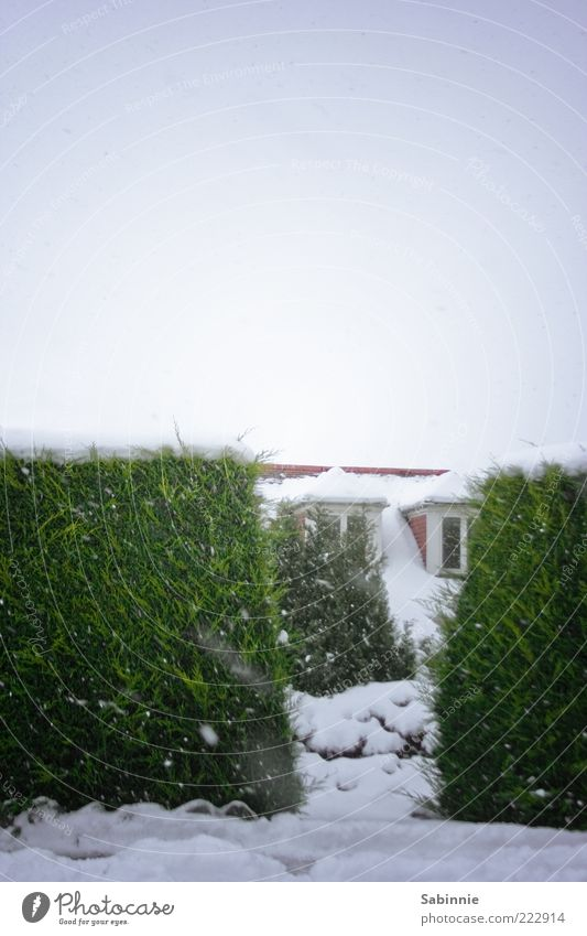 Snowy Afternoon Walk Winter Schnee Haus Himmel Eis Frost Hecke Einfamilienhaus Gebäude Fenster Erker Erkerfenster Dach grün weiß Farbfoto Gedeckte Farben