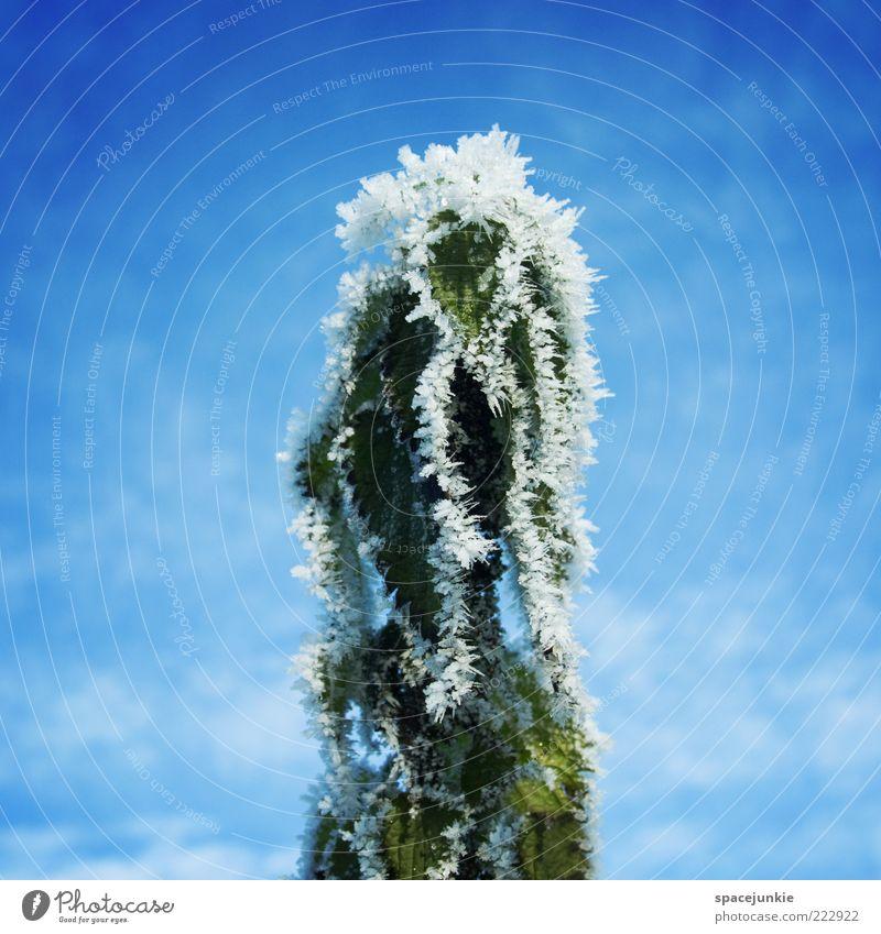 Erogene Zone Himmel Natur weiß grün blau Pflanze Winter Wolken kalt Gefühle Eis Frost skurril Blauer Himmel Schönes Wetter Eiskristall