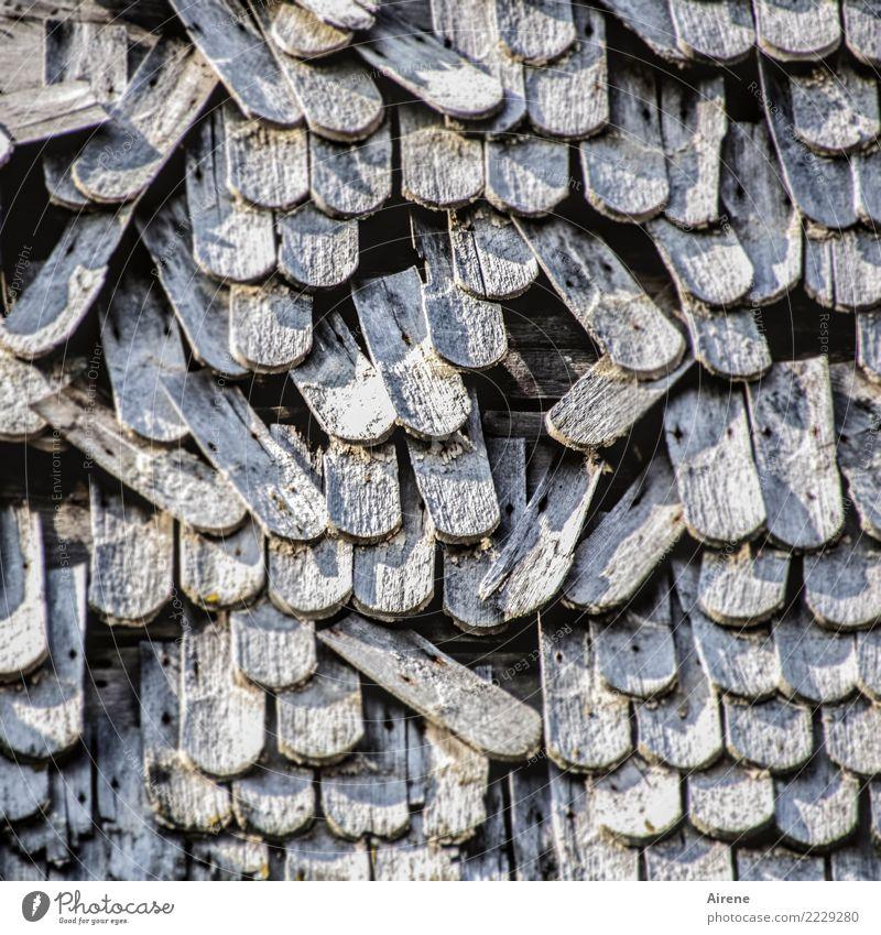 einzelne Ausfälle Dach Holzvertäfelung Schindeldach Holzschindel Lücke fehlerhaft alt kaputt trocken grau Armut Verfall Vergänglichkeit Häusliches Leben Zeit