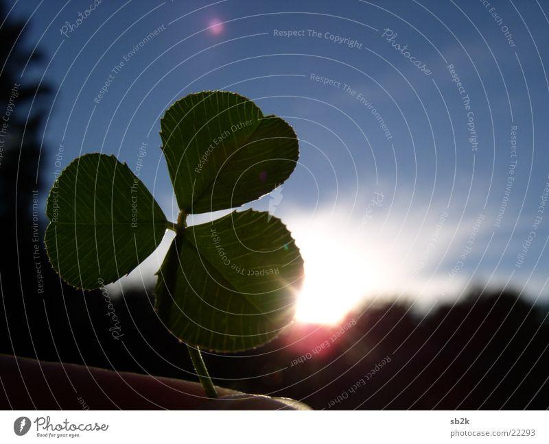 Glück am Abend Kleeblatt Hand Sonnenuntergang gelb rot schwarz Sonnenstrahlen Himmel blau Blendenfleck