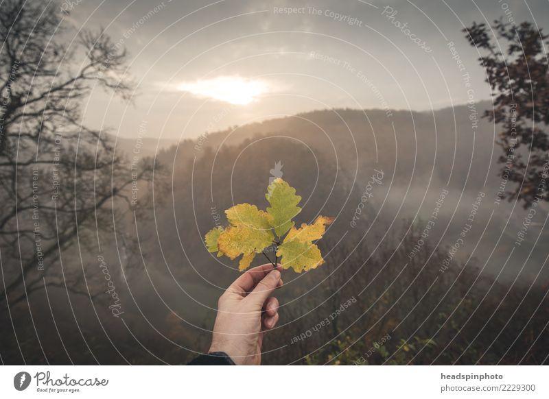 Herbststimmung: verfärbtes Laubblatt vor Wald bei Sonnenaufgang Freizeit & Hobby Ferien & Urlaub & Reisen Tourismus Ausflug Abenteuer Berge u. Gebirge wandern