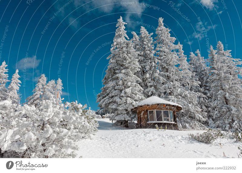 Raststätte Natur Landschaft Himmel Winter Schönes Wetter Schnee Baum Alpen Berge u. Gebirge Menschenleer Hütte groß kalt schön blau weiß ruhig