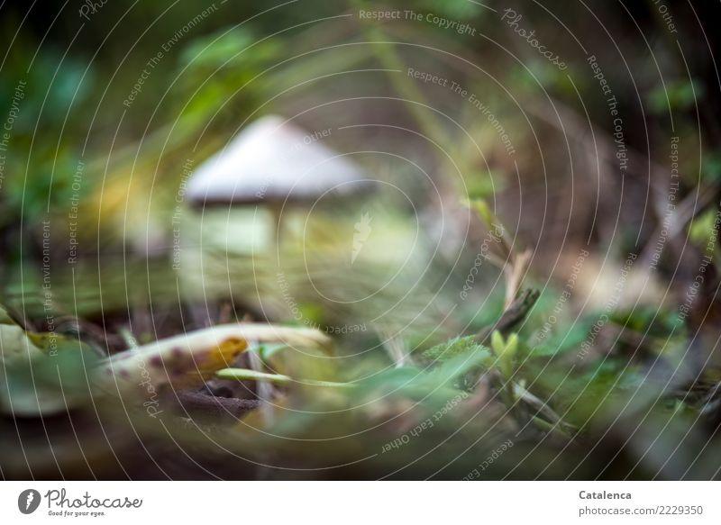 Brille verlegt Natur Erde Herbst Pflanze Gras Sträucher Moos Blatt Pilz Garten Wald dehydrieren Wachstum nachhaltig natürlich schleimig braun gelb grau grün