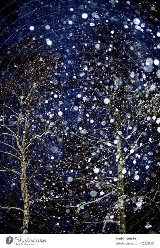 Schnee, immer nur Schnee... schlechtes Wetter Schneefall Baum Wald ästhetisch Vorfreude Schneeflocke Winter Farbfoto Außenaufnahme Experiment abstrakt Nacht