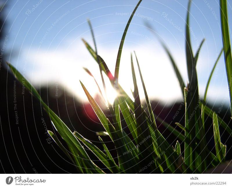 die letzten Momente... Sonne blau rot schwarz gelb Gras