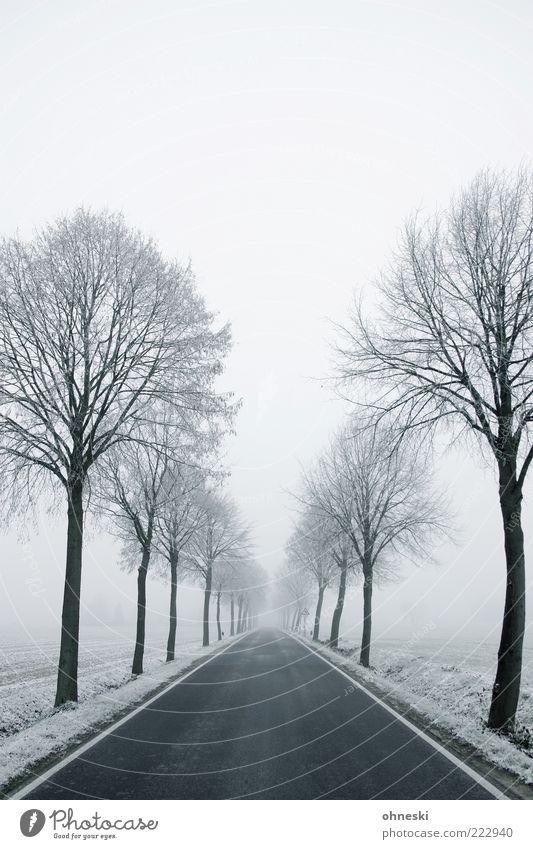 Schneeallee Winter Wetter schlechtes Wetter Eis Frost Baum Straße Wege & Pfade Allee kalt weiß Sehnsucht Einsamkeit Perspektive Zukunft Gedeckte Farben