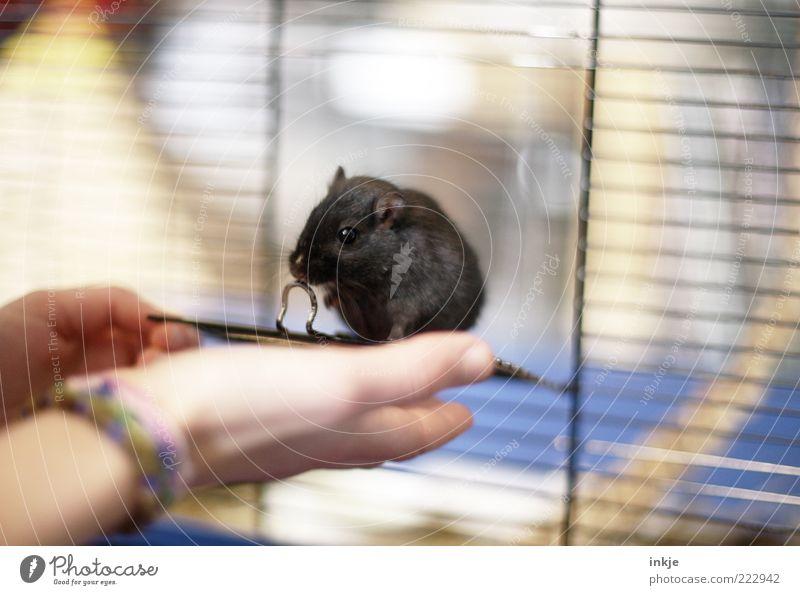 Vertrauen Hand Tier Leben Gefühle Glück klein Stimmung Freundschaft Kindheit Zusammensein Sicherheit niedlich beobachten Neugier Schutz
