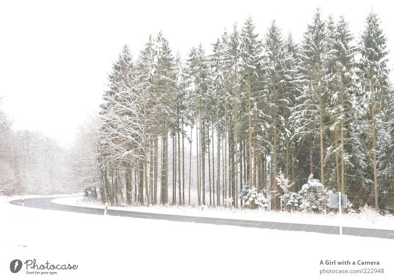 The road to Xmas Natur weiß schön Baum Pflanze Winter ruhig Wald Straße Schnee Umwelt Landschaft warten Verkehr gefährlich Asphalt