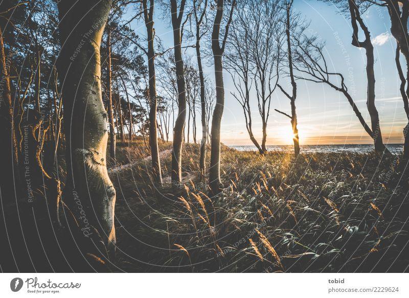 Sommeridylle No2 Natur Landschaft Pflanze Himmel Wolken Horizont Schönes Wetter Baum Gras Sträucher Wald Wellen Küste Ostsee Einsamkeit einzigartig Idylle Ferne
