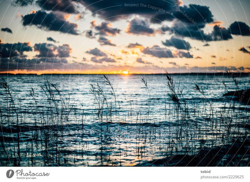 Sonnenuntergang am Meer Natur Landschaft Urelemente Wasser Himmel Wolken Horizont Schönes Wetter Gras Sträucher Wellen Küste Ostsee frei Unendlichkeit