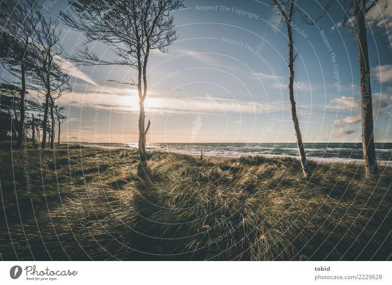 Sommeridylle No5 Natur Landschaft Pflanze Wasser Himmel Wolken Horizont Sonne Schönes Wetter Wind Baum Gras Sträucher Wiese Wald Wellen Küste Strand frei