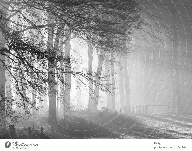 kalter Wintermorgen Umwelt Natur Landschaft Nebel Eis Frost Pflanze Baum Gras Wiese Wald leuchten stehen Wachstum ästhetisch außergewöhnlich natürlich grau