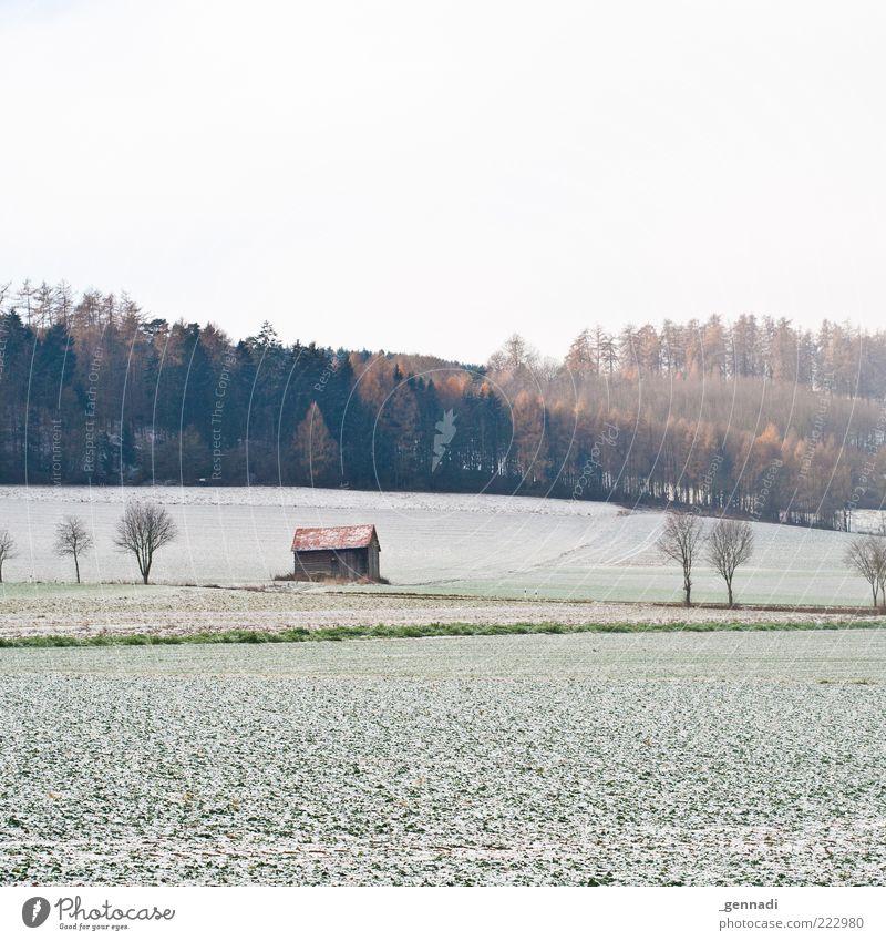Was lange währt.. Himmel Natur weiß Baum Pflanze Winter ruhig Ferne kalt Schnee Landschaft Umwelt Eis Feld Kraft Wetter