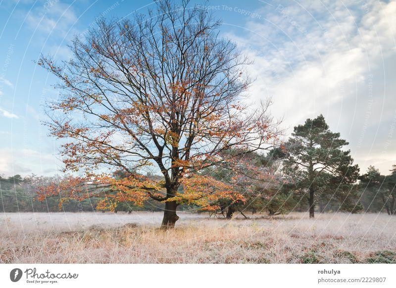 Himmel Natur blau Landschaft Baum Winter gelb Herbst Wiese Schnee Gras wild Wetter Eis Aussicht Schönes Wetter