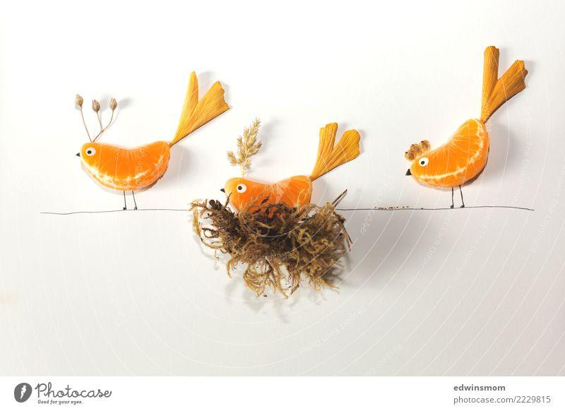 Fruit birds weiß Blatt Wärme Herbst natürlich feminin klein orange Zusammensein Freizeit & Hobby Frucht Dekoration & Verzierung stehen Kreativität Fröhlichkeit