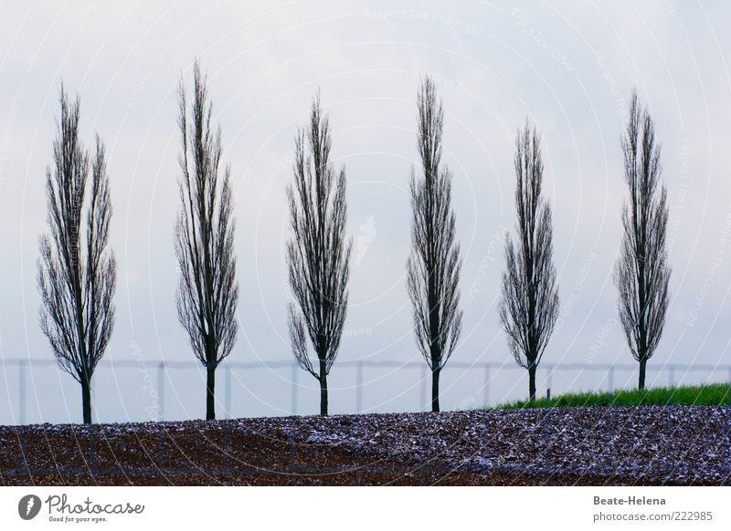 Ordentlich in Reih und Glied Natur Baum grün schön Pflanze Ferien & Urlaub & Reisen grau Landschaft Ausflug Ordnung hoch ästhetisch einfach Frieden harmonisch