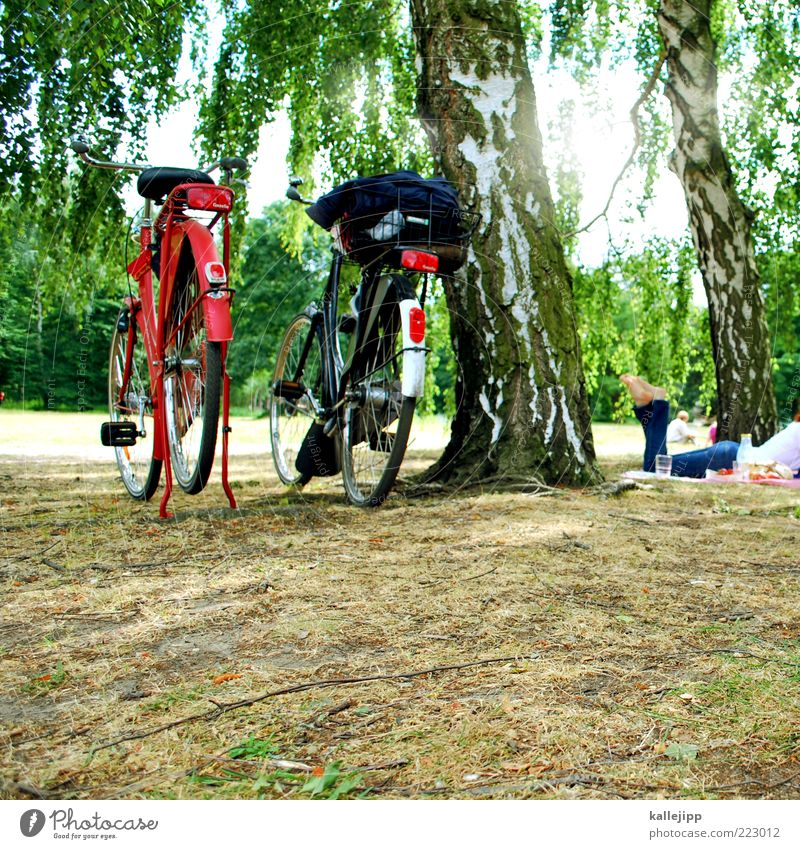 ein picknick im park Ferien & Urlaub & Reisen Tourismus Ausflug Fahrradtour Sommer Sommerurlaub Sonne Sonnenbad Frau Erwachsene 1 Mensch Klima Wetter