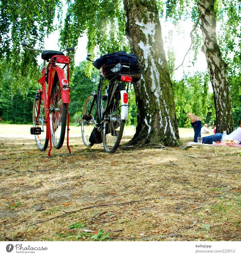 ein picknick im park Frau Mensch Baum Sonne Sommer Ferien & Urlaub & Reisen Erholung Berlin Wiese Gras Park Beine Fahrrad Wetter Erwachsene Ausflug