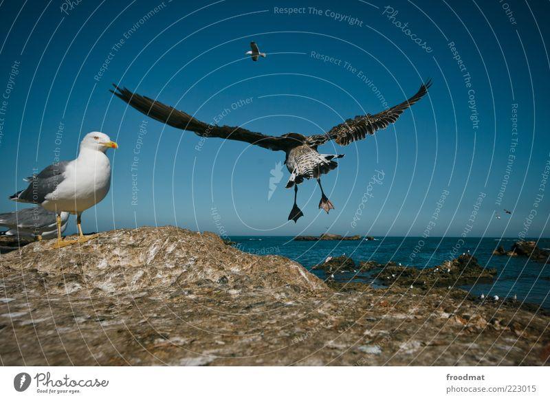 möwenpic Wasser Sommer Meer Tier Luft Umwelt Vogel elegant Felsen fliegen Flügel Tiergruppe Seeufer Möwe Fernweh Abheben