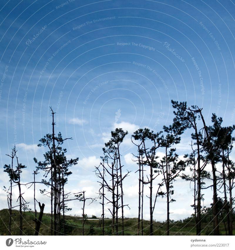 Luft nach oben Himmel Natur Baum ruhig Einsamkeit Umwelt Landschaft Zeit Wind ästhetisch Wachstum kaputt Wandel & Veränderung einzigartig Vergänglichkeit