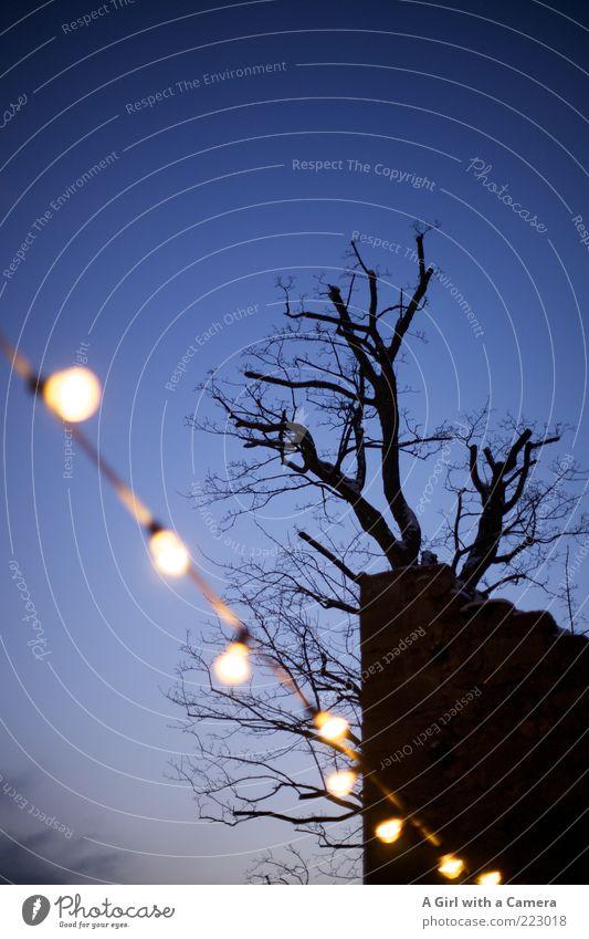 blue xmas Natur Baum blau schön Winter schwarz kalt Wand Holz Stein Mauer Glas Elektrizität wild Kitsch leuchten