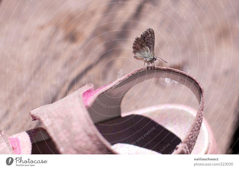 Sommer Natur Tier Holz grau Umwelt Schuhe braun klein rosa sitzen Flügel Schmetterling Wildtier krabbeln Sandale