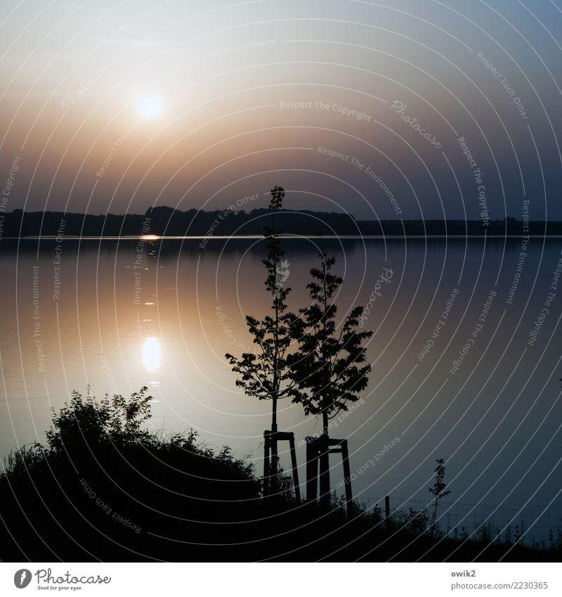 Abendgruß Umwelt Natur Landschaft Pflanze Horizont Schönes Wetter Baum Gras Sträucher Seeufer leuchten außergewöhnlich ruhig Idylle Ferne Windstille friedlich