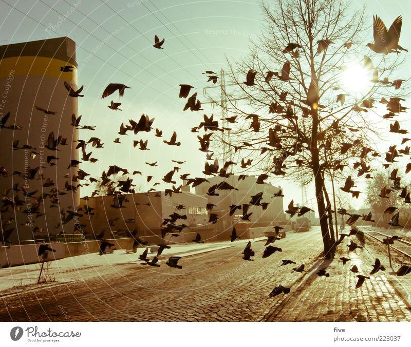 Hamburg City Birds Natur Himmel Winter Pflanze Baum Stadt Hafenstadt Stadtrand Industrieanlage Fabrik Bauwerk Gebäude Tier Vogel Taube Tiergruppe fliegen
