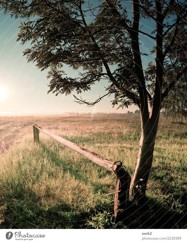 Übergang Natur Pflanze Landschaft Baum Umwelt Gras Horizont leuchten Schönes Wetter Weide