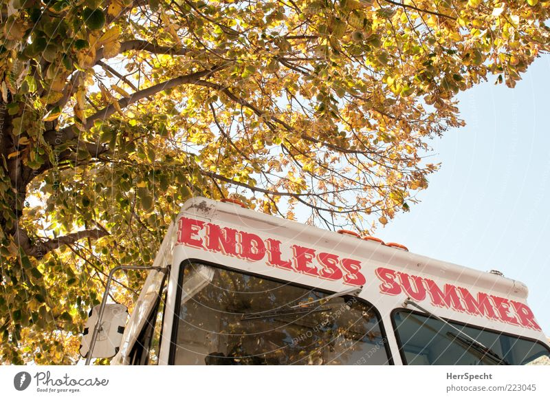 Endless Summer Sommer Herbst Baum Fahrzeug Eiswagen Schriftzeichen gelb rot weiß Herbstlaub Aufschrift Eisverkäufer Brooklyn Verkaufswagen Unendlichkeit
