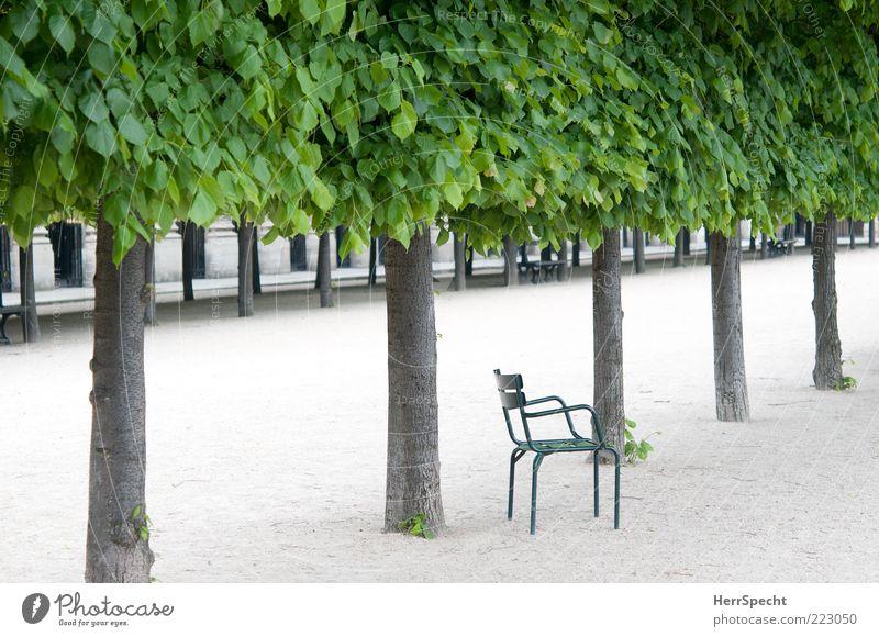 Für Einzelsitzer grün Pflanze Sommer Blatt Einsamkeit Holz grau Traurigkeit Park Metall warten Zufriedenheit ästhetisch Trauer Stuhl Unendlichkeit