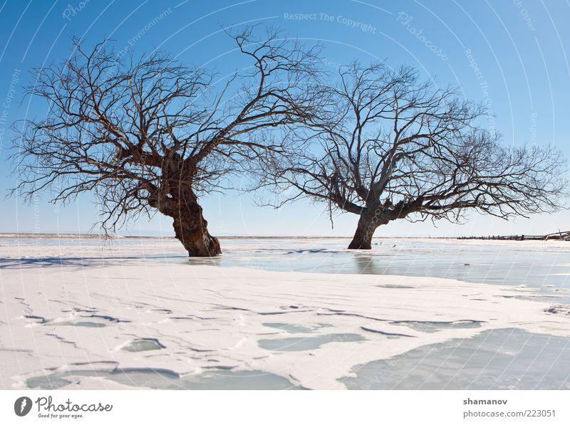 Bäume in einem Eis des Sees Winter Schnee Berge u. Gebirge Natur Landschaft Himmel Frost Baum Küste Zusammensein blau weiß Baikalsee Sibirien Windstille kalt