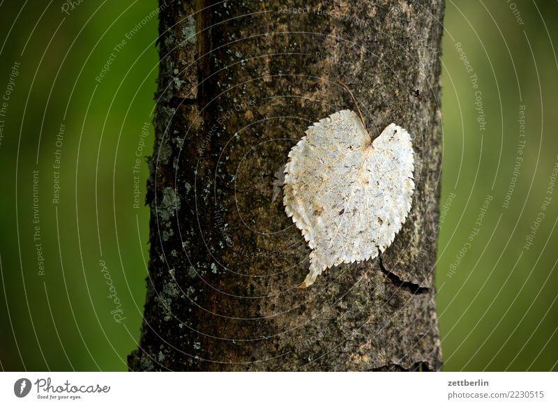 Opportunistisches Herz Ast Baum Baumstamm Blatt Zweig herzförmig Romantik Park Wald grün Natur