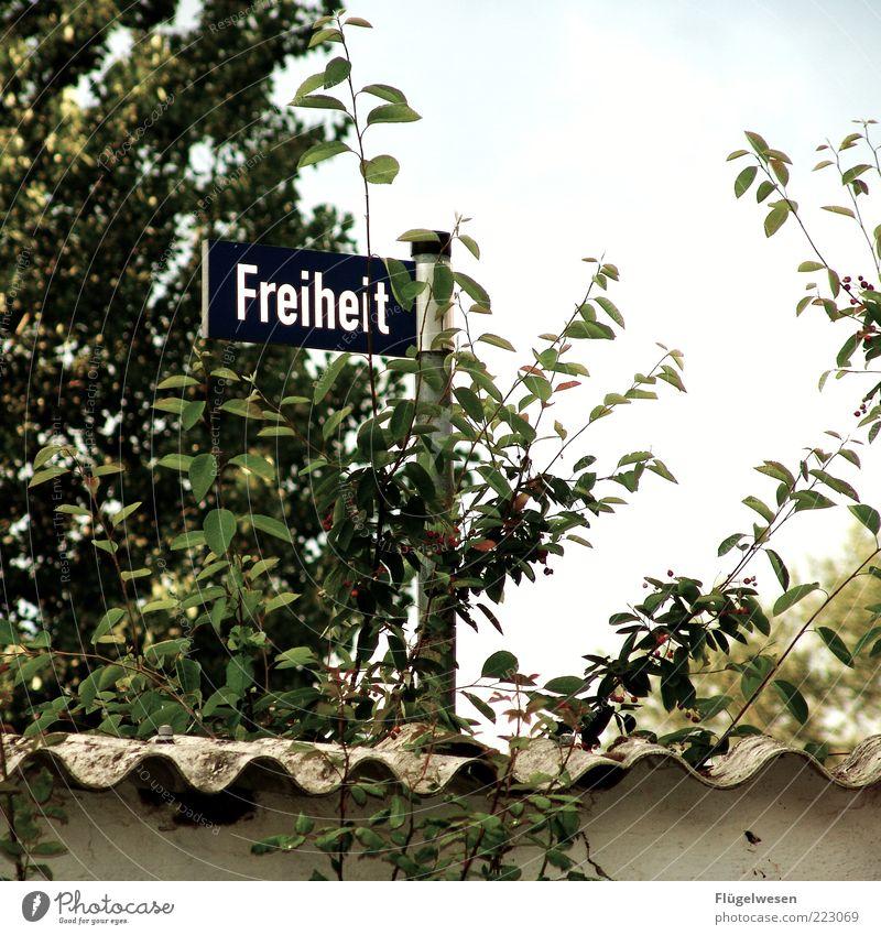 500x Garten Umwelt Natur Klima Wetter Pflanze Baum Sträucher Park Freude Straßennamenschild Mauer Wellblech Himmel Freiheit Farbfoto Außenaufnahme Tag
