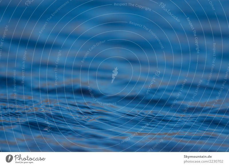 Auf der Welle des Lebens Natur Pflanze blau Wasser Landschaft Meer Erholung Tier Freude Strand Umwelt Gesundheit Gefühle Küste Glück Schwimmen & Baden