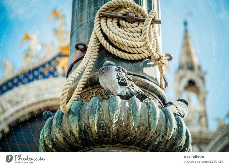 Taube Venedig Italien Tier Stadt Ferien & Urlaub & Reisen Kreuzfahrt Adria Seil Brennpunkt