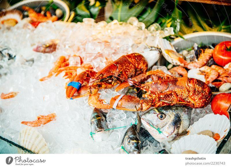 Essen ist fertig Fisch Meeresfrüchte Ernährung Mittagessen Abendessen Italienische Küche Ferien & Urlaub & Reisen Tourismus Ausflug Abenteuer Ferne Freiheit