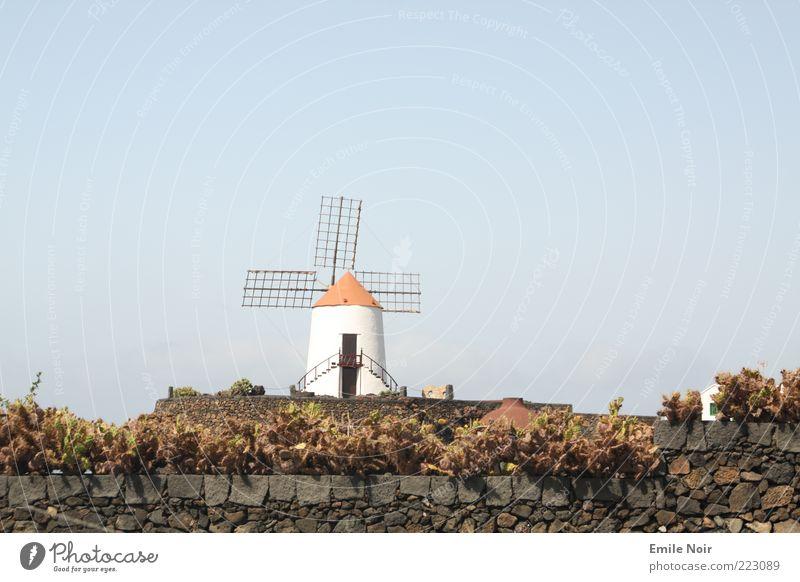 Holländisch Lanzarote Sommer Mauer Gebäude frei Insel Freizeit & Hobby Sträucher trocken Blauer Himmel Schönes Wetter Kaktus Windmühle Mühle Spanien Lanzarote Wolkenloser Himmel