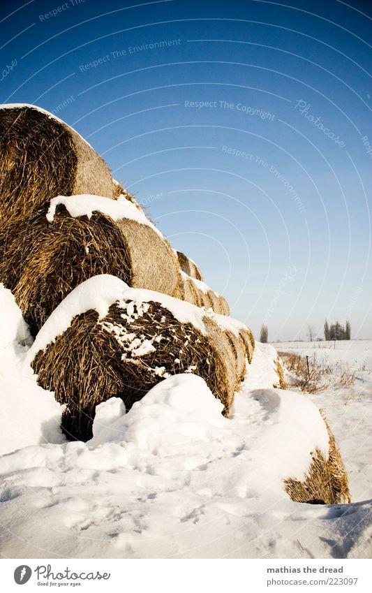 WINTER Himmel Natur weiß Baum blau schön Pflanze Winter Einsamkeit kalt Schnee Wiese Landschaft Umwelt Eis Feld