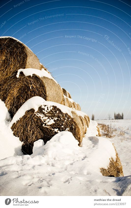 WINTER Umwelt Natur Landschaft Himmel Wolkenloser Himmel Horizont Winter Klima Schönes Wetter Eis Frost Schnee Pflanze Baum Sträucher Wiese Feld Coolness kalt