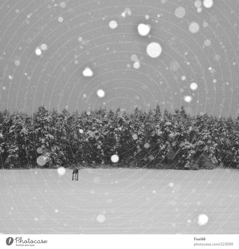 Stille Winter Schnee Landschaft Schneefall Baum Feld Wald Menschenleer atmen Bewegung genießen dunkel kalt natürlich schwarz weiß Gefühle Begeisterung Sehnsucht