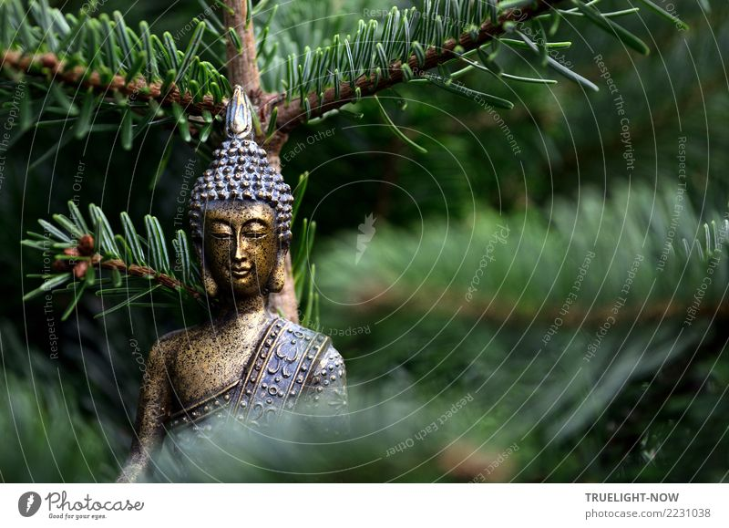 Goldene Buddha Skulptur vor Tannenzweigen Lifestyle Glück Wellness Leben harmonisch Wohlgefühl Zufriedenheit Sinnesorgane Erholung ruhig Meditation Bildung