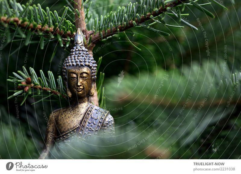 Goldene Buddha-Skuptur von Tannenzweigen blau grün Erholung ruhig Leben Lifestyle Gesundheit natürlich Glück Zufriedenheit träumen frei gold ästhetisch Lächeln