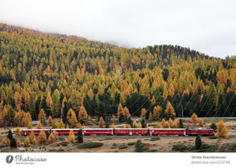 Für untern Weihnachtsbaum Baum rot Ferne Wald Herbst Berge u. Gebirge Landschaft Verkehr Eisenbahn Güterverkehr & Logistik Schweiz Alpen Gleise Schnellzug Personenverkehr Pass