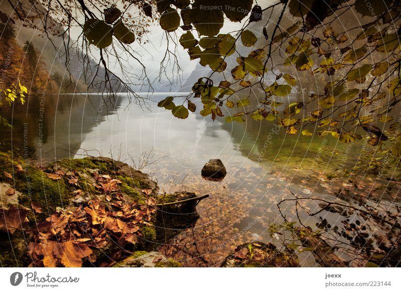 Trinkwasser Himmel Natur Wasser Baum grün Ferien & Urlaub & Reisen Blatt ruhig Erholung Herbst Berge u. Gebirge Landschaft Stein braun Wetter nass