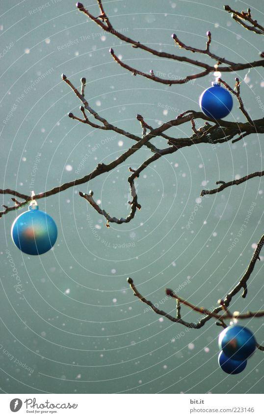White Christmas II Winter Eis Frost Schnee Schneefall Baum kalt Kitsch verrückt trashig blau grün Stimmung Tradition Weihnachten & Advent Weihnachtsbaum