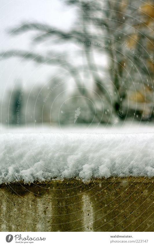 Neuschnee weiß Baum grün Winter Schnee Wand Mauer Schneefall nass ästhetisch trist Sträucher außergewöhnlich frieren abstrakt Schneedecke