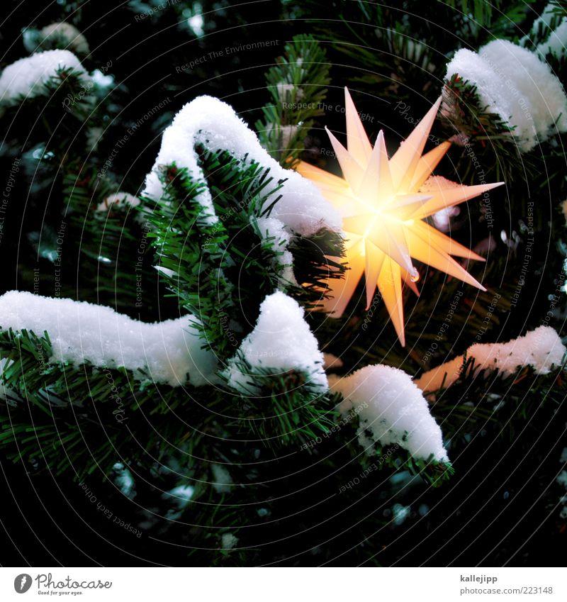 saisonware Zeichen leuchten Tanne Weihnachtsbaum Stern Weihnachtsdekoration Christentum Weihnachtsstern Schneedecke Weihnachten & Advent Neuschnee weiß Baum
